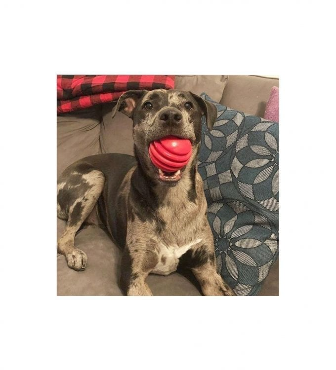 USA-K9 STARS AND STRIPES DENTAL BALL in Dog's Mouth
